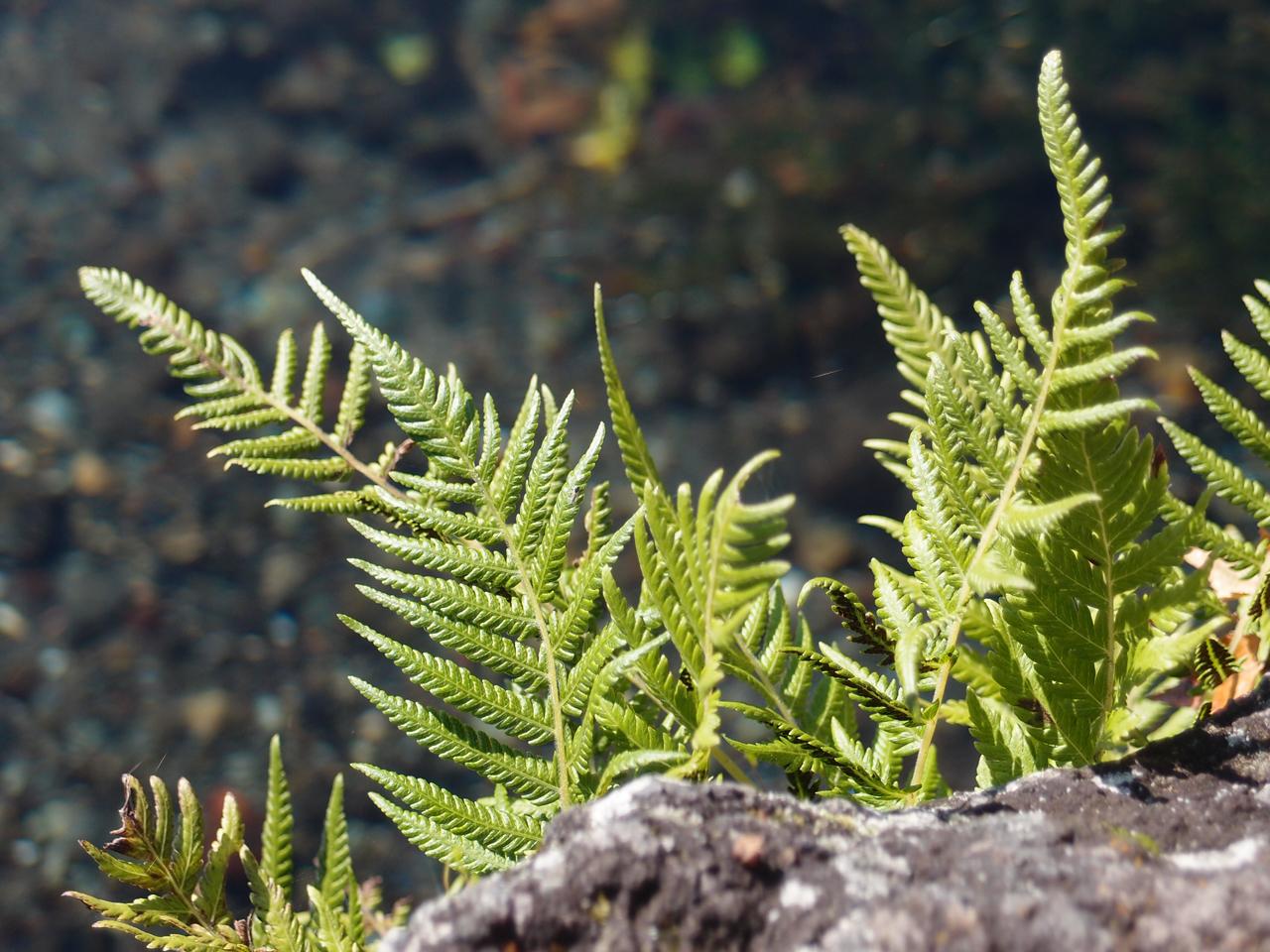 川辺の植物