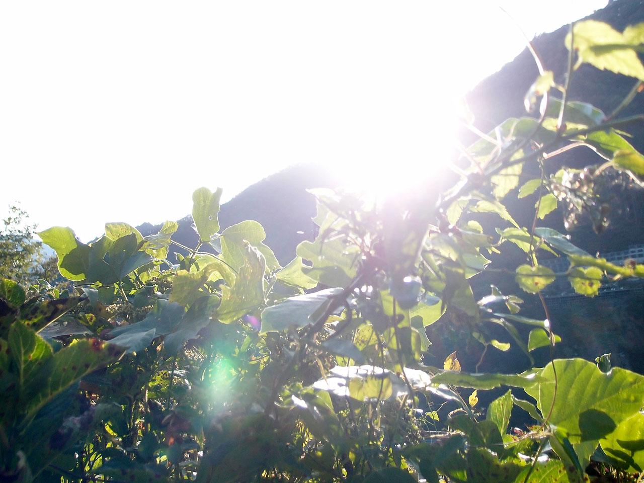 山梨県山間の光