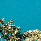 エメラルドグリーンの奈良田湖