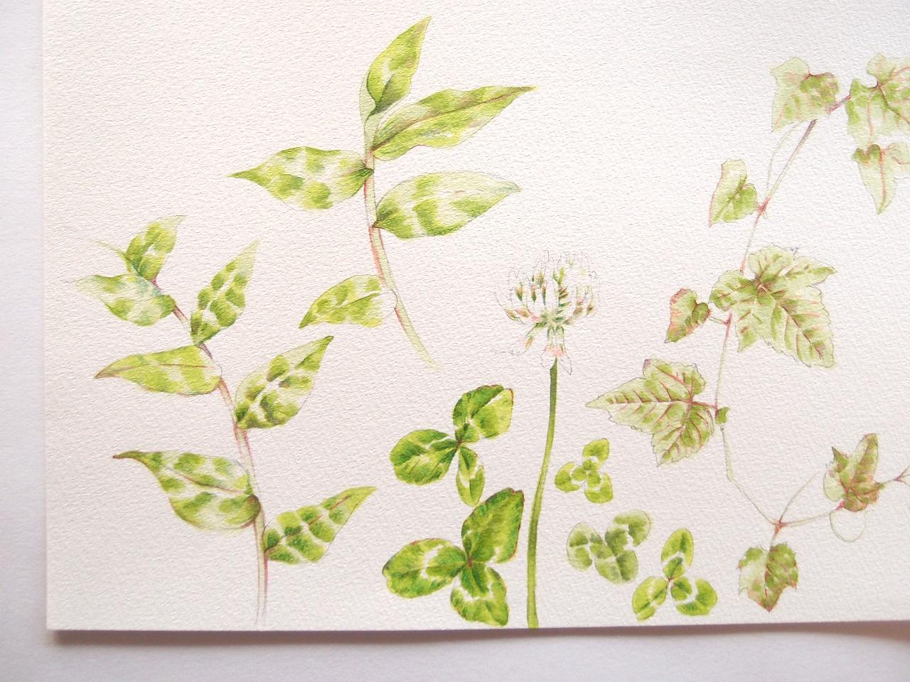 野の花のイラスト