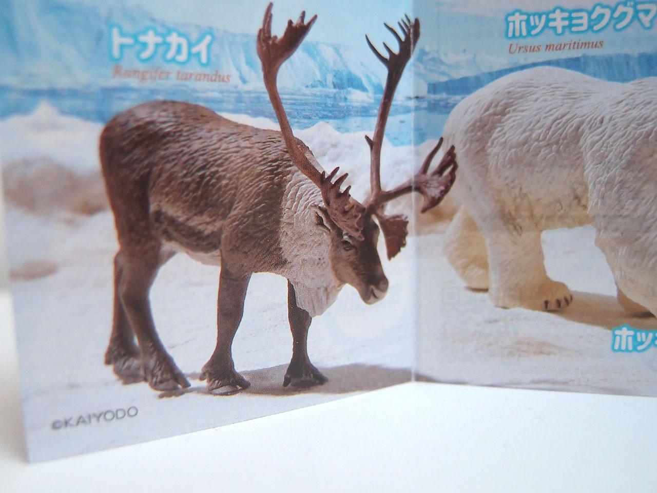 ワイルドラッシュ3極地・北極圏編のトナカイ